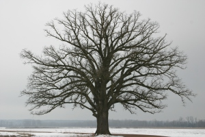 tumblr_static_winter_tree_by_epickittyness-d3dpj76